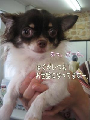 コピー (6) ~ はぐ日