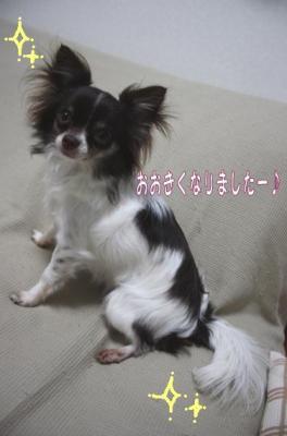 コピー (8) ~ はぐ日