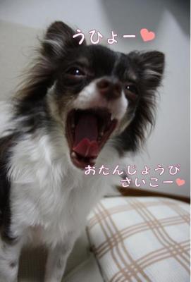 コピー (7) ~ お誕生日