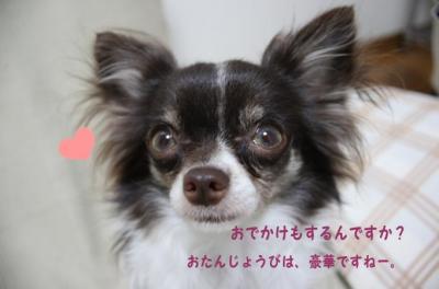 コピー (8) ~ お誕生日