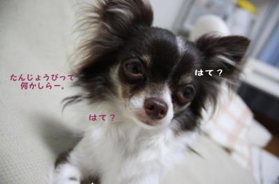 コピー (6) ~ お誕生日