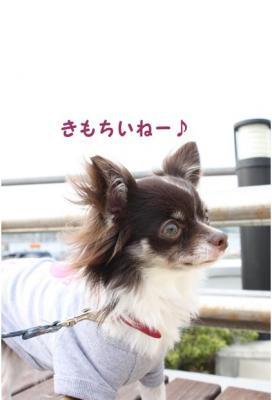 コピー (6) ~ 横浜