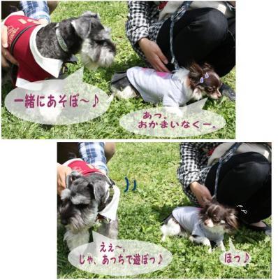 コピー (2) ~ ゆめ牧場