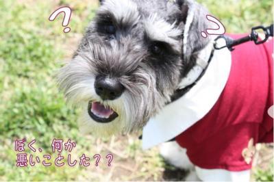 コピー (4) ~ ゆめ牧場
