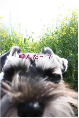 コピー (11) ~ ゆめ牧場