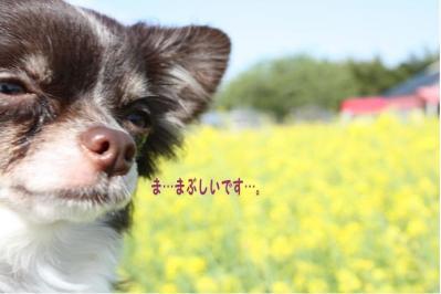 コピー (9) ~ ゆめ牧場