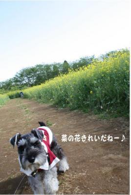コピー (10) ~ ゆめ牧場