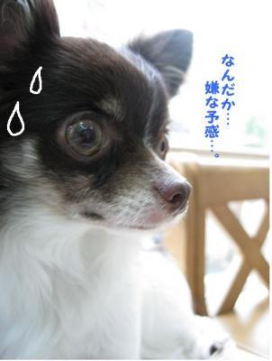 コピー (4) ~ 招待状