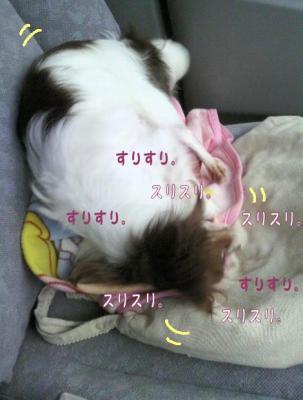 コピー (2) ~ フサフサ