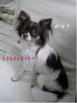 コピー (5) ~ フサフサ