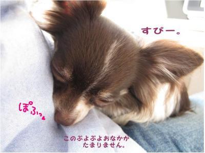 コピー (5) ~ 使い道