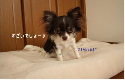 コピー (3) ~ 寝ドコ