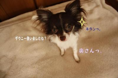コピー (2) ~ 寝ドコ