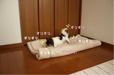 コピー (4) ~ 寝ドコ
