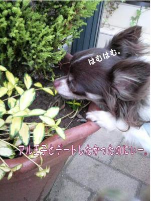 コピー (3) ~ おかげ
