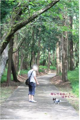 コピー (3) ~ 公園