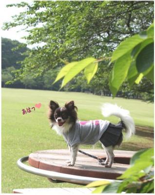 コピー (8) ~ 公園