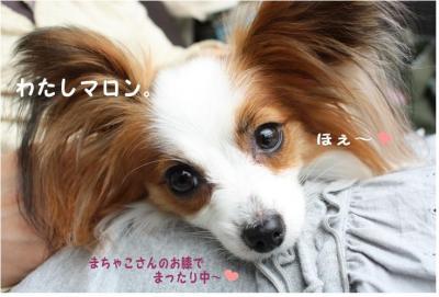 コピー (4) ~ ハニロジ