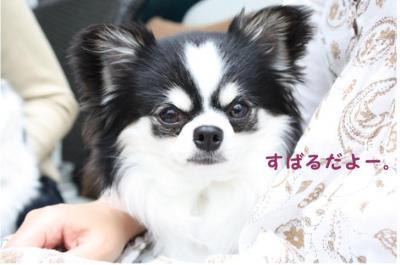 コピー (3) ~ ハニロジ