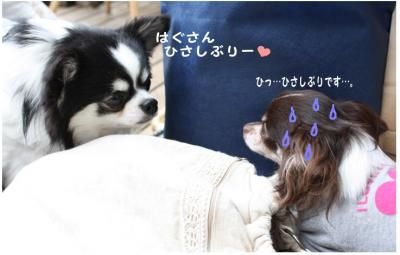 コピー (2) ~ ハニロジ