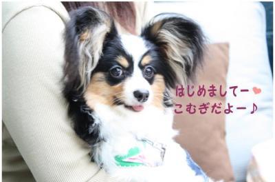 コピー (5) ~ ハニロジ