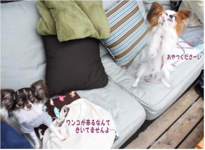 コピー (9) ~ ハニロジ