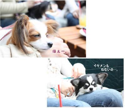 コピー (10) ~ ハニロジ