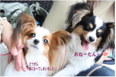 コピー (7) ~ ハニロジ