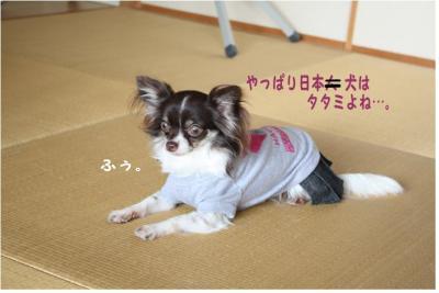 コピー (13) ~ ハニロジ
