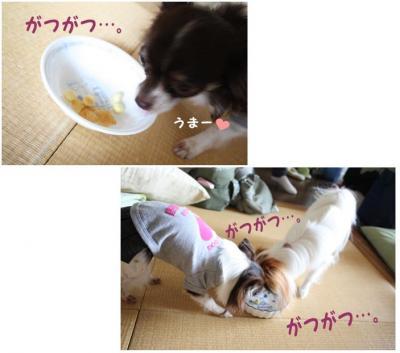 コピー (14) ~ ハニロジ