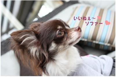 コピー ~ ハニロジ