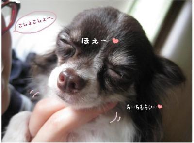 コピー (9) ~ 実家