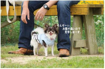 コピー (2) ~ ドッグラン