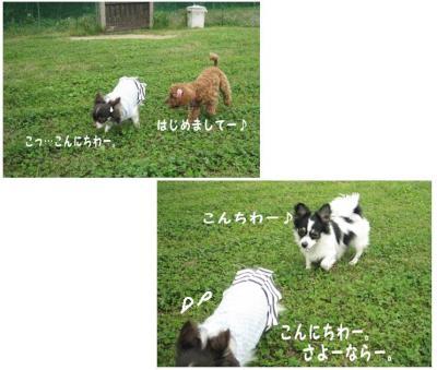 コピー (3) ~ ドッグラン
