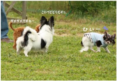 コピー (4) ~ ドッグラン