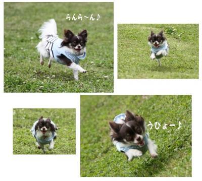 コピー (7) ~ ドッグラン