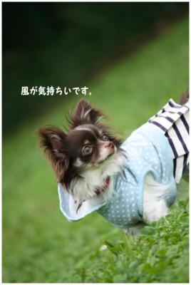 コピー (8) ~ ドッグラン
