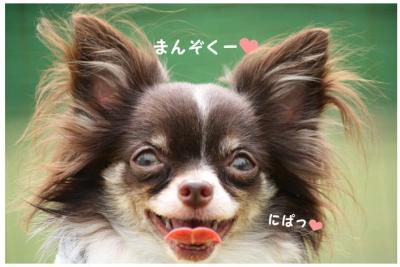 コピー (11) ~ ドッグラン
