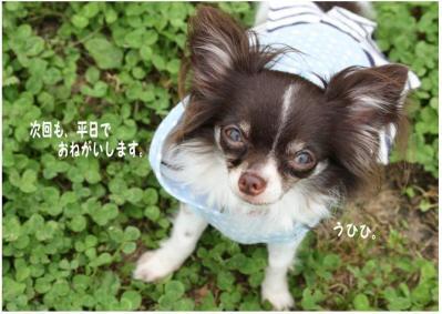 コピー (12) ~ ドッグラン