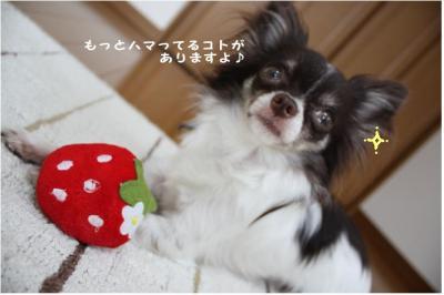 コピー (5) ~ いちごちゃん