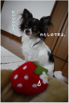 コピー ~ いちごちゃん