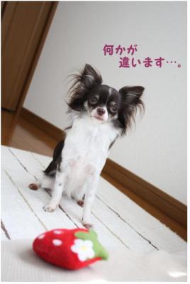 コピー (2) ~ いちごちゃん2