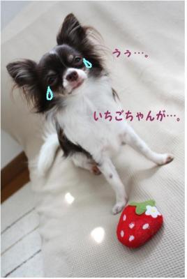 コピー (3) ~ いちごちゃん2