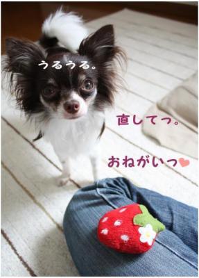 コピー (7) ~ いちごちゃん2