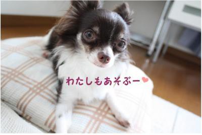 コピー (4) ~ メリア