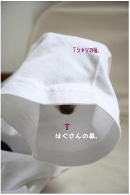 コピー (5) ~ ドリライブ
