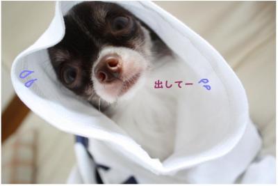 コピー (7) ~ ドリライブ