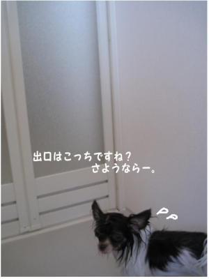 コピー (4) ~ お洗濯