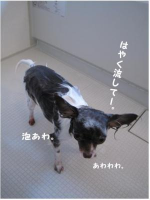 コピー (2) ~ お洗濯