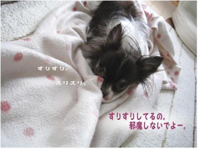 コピー (5) ~ お洗濯